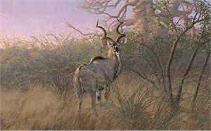 "Michael Sieve Handsigned and Numbered Limited Edition:""Into the Jess-Kudu"""