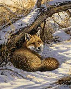 "Rosemary Millette Limited Edition Print: ""Restful Moment-Red Fox"""