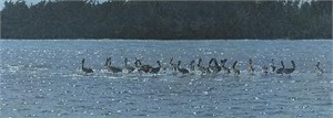 "Randall Scott Handsigned & Numbered Limited Edition Print:""Indian River Crossroads - Brown Pelicans"""