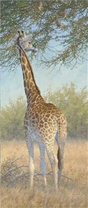 "Michael Sieve  Hand Signed and Numbered Limited Edition Canvas Giclee:""Giraffe"""