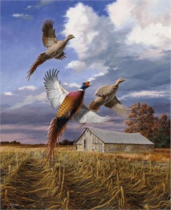 "David Maass Hand Signed & Number Limited Edition:""Autumn Brilliance - Pheasants"""