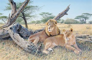 "Jim Kasper Hand Signed & Number Limited Edition:""Ardent Pair - Lions"""