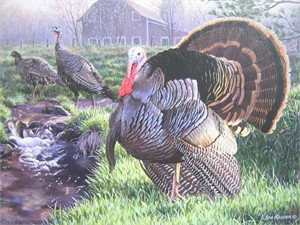 "Jim Kasper Artist Proof Wild Turkey Stamp Print:""Spring Show - Wild Turkey's"""
