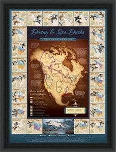 "David A. Maass Hand Signed and Numbered Limited Edition Framed Poster: ""Migration Map; Diving and Sea Ducks"""