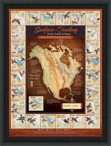 "David A. Maass Hand Signed and Numbered Limited Edition Framed Poster: ""Migration Map; Surface Feeding Waterfowl"""