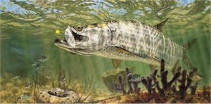 "Don Ray Handsigned and Numbered Limited Edition Print: ""Golden Fly - Tarpon"""