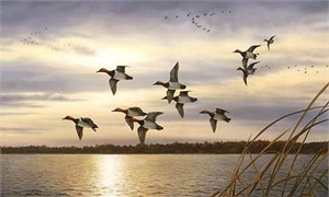 """Robert Hautman Handsigned and Numbered Limited Edition Canvas Giclee: """"Sunset Canvasbacks"""""""