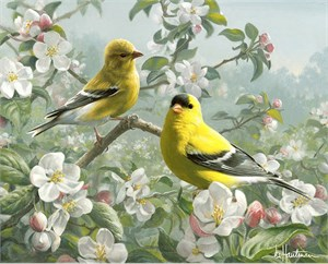 "Joe Hautman Handsigned and Numbered Limited Edition Canvas Giclee: ""Orchard Goldfinch"""