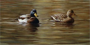 "Joe Hautman Handsigned and Numbered Limited Edition Canvas Giclee: ""Cedar Tree with Mallards"""